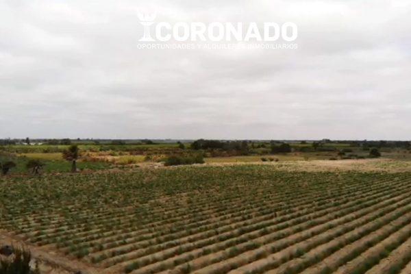 Terreno Agrícola en Macabi Bajo